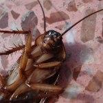 Εξαφάνισε τις κατσαρίδες