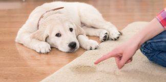 Μυρίζει ούρα σκύλου η μοκέτα;