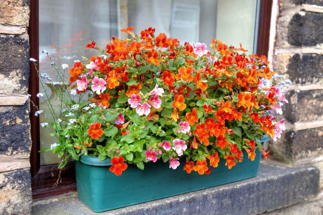 Εχεις λουλούδια στο περβάζι;
