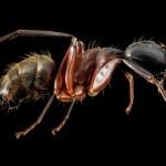 Είδες μυρμήγκια στην κουζίνα;