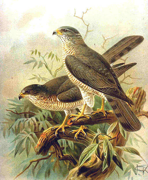 Μεγάλα κόλπα πουλί
