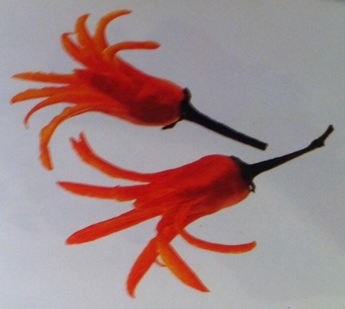 Γαρνιτούρες – Λουλούδια από Κόκκινη Πιπεριά