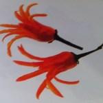 Λουλούδια από κόκκινη πιπεριά