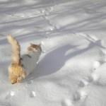 Μια γάτα παίζει με το χιονι