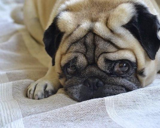 Ποια μυρωδιά δεν αρέσει στα σκυλιά