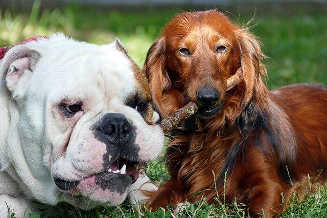 Εφαγε το σκυλί κάτι χαλασμένο;