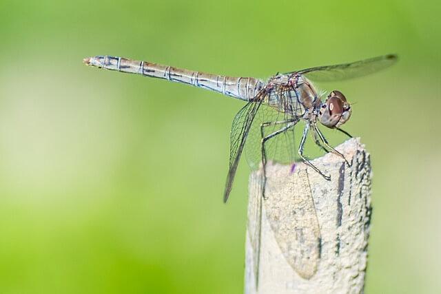 Το κουνούπι αν σε τσιμπήσει, αυτό θα κάνεις