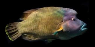 Το ψάρι έτσι το αλευρώνεις