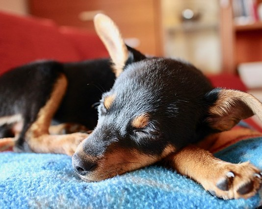 Για να μη μυρίζει το κρεβάτι του σκύλου