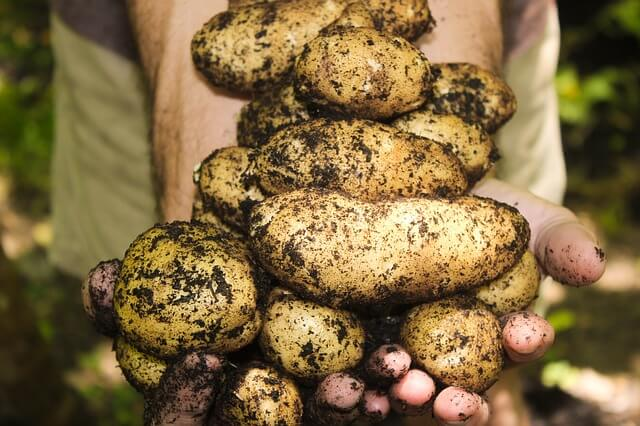 Πατάτες - πως τις διαλέγουμε και πως τις διατηρούμε