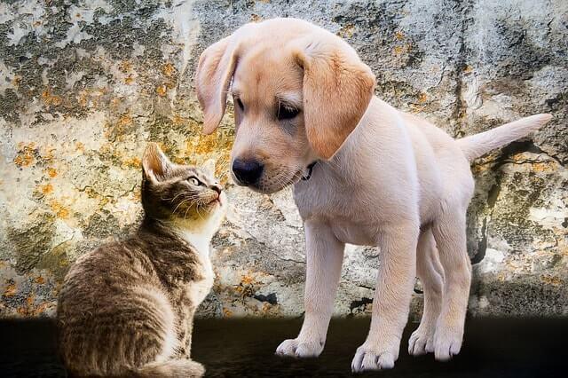 Τρίχωμα γάτας – σκύλου στον καναπέ;