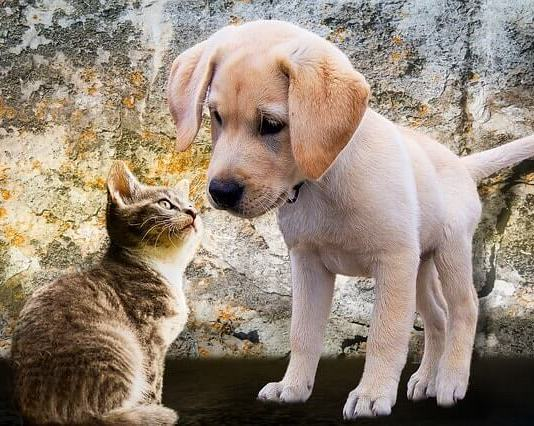 Τρίχες γάτας ή σκύλου στον καναπέ