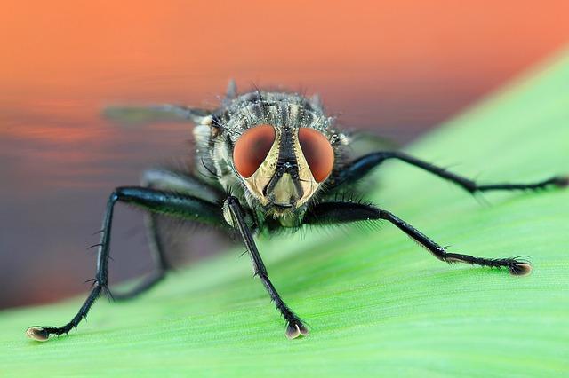 Για να μη σας ζαλίζουν οι μύγες