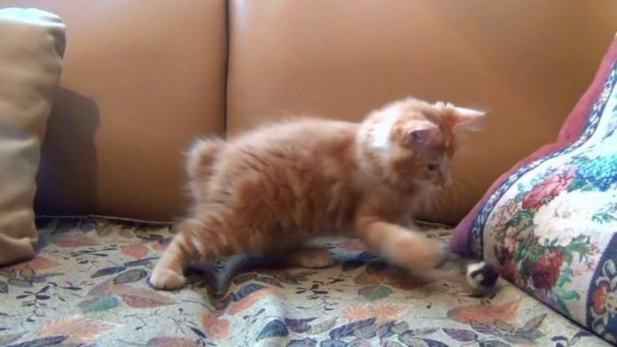 Τρελά γατάκια παιχνιδιάρικα
