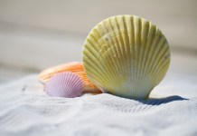 Ονειροκρίτης - Ονειρεύτηκα άμμο