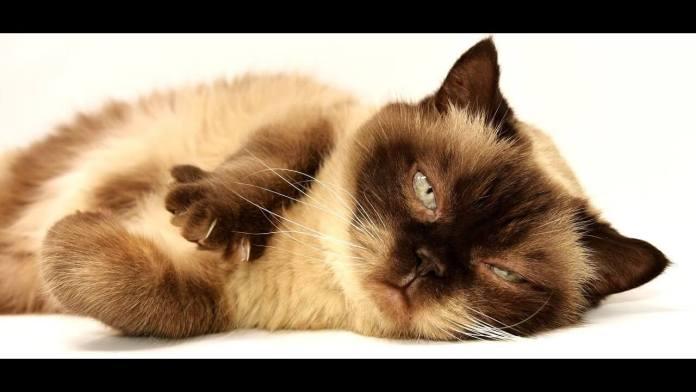 Μυρίζει η άμμος της Γάτας; Υπάρχει κόλπο;