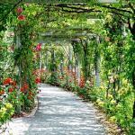 σχετικά με τις κατηγορίες φυτών