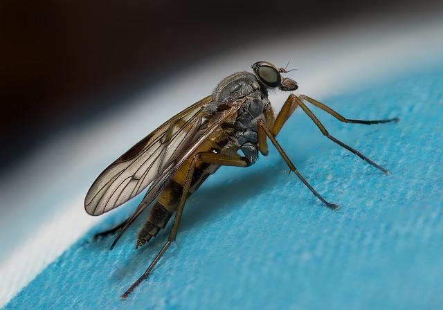 Περιττώματα μύγας σε βιβλίο