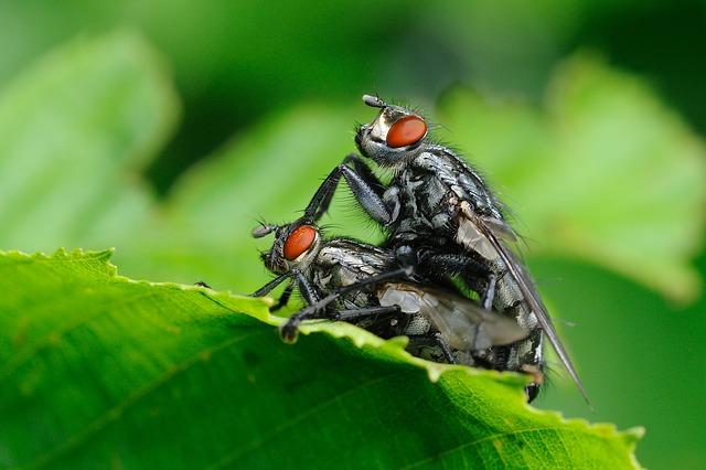 Μύγες είναι και το κάνουν κι αυτό!