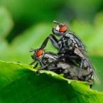 Αυτό για τις μύγες το ξέρεις