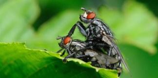 Τα πόδια της μύγας