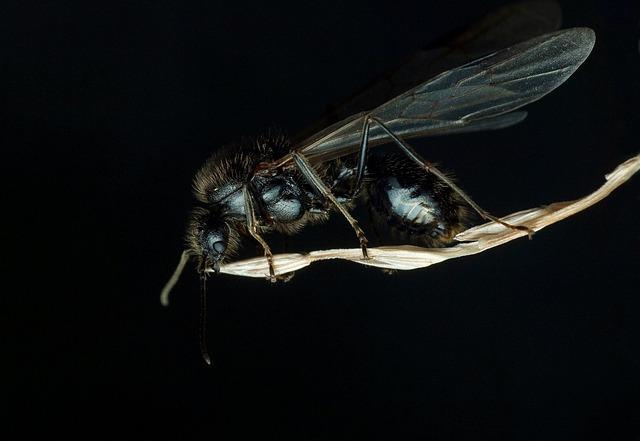 Για δες τι υπάρχει στα πόδια της μύγας