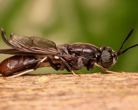 Ξέρεις πως μυρίζουν οι μύγες;