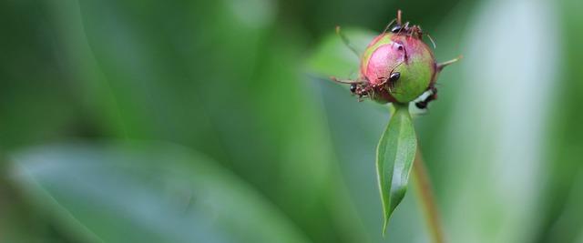Κάπως έτσι θα τα διώξεις τα μυρμήγκια