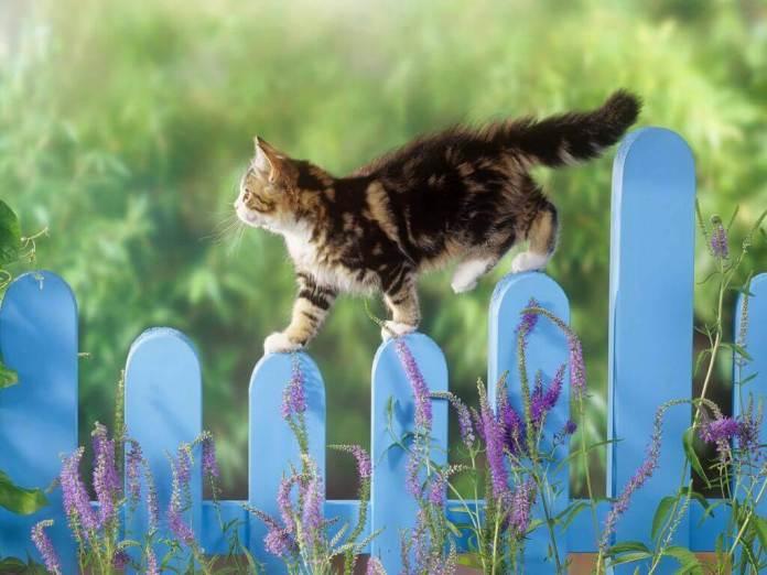 Για να μη σου κάνει μαντάρα τα φυτά η γάτα