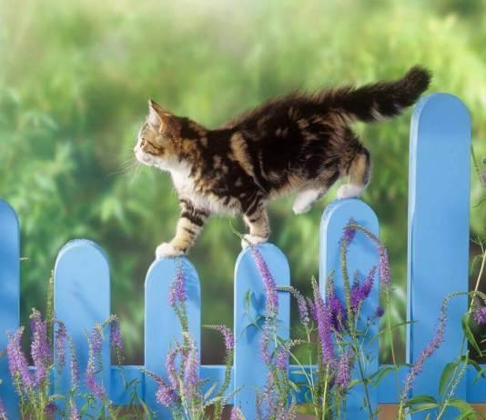 Για να μη πηγαίνει στα φυτά η γάτα