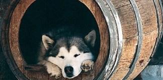 Πρωτότυπο σπίτι για το σκύλο
