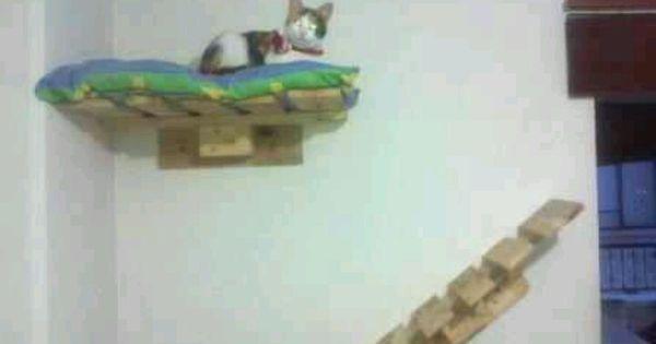 Η παλέτα για τη γάτα