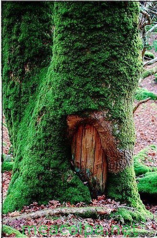 Μια πόρτα στο δέντρο