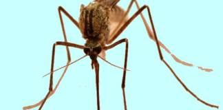 Φτιάξτε απωθητικό κουνουπιών