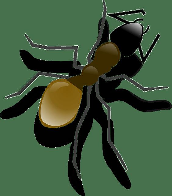 Για να μη μπαίνουν τα μυρμήγκια στο σπίτι σου