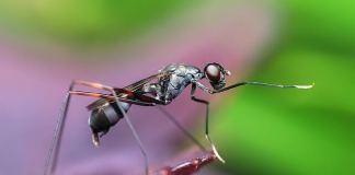 Κοκτέιλ για τα μυρμήγκια