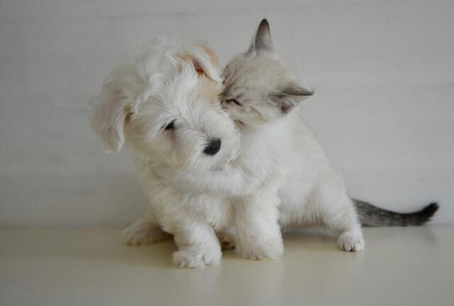 Το καινούργιο σκυλάκι ή γατάκι δεν το παίρνει ύπνος