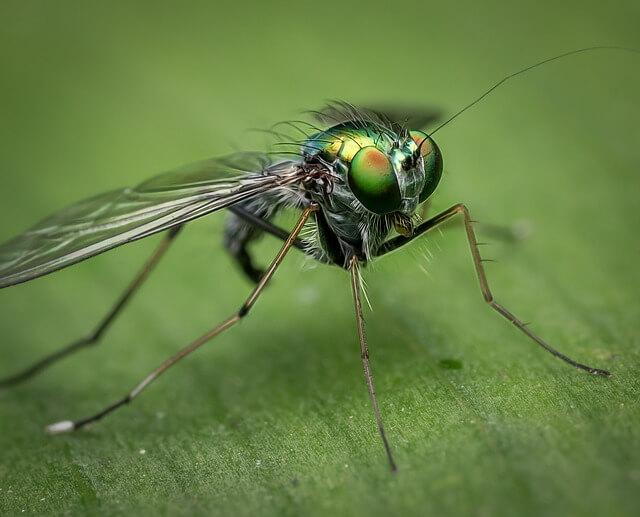 Για να μη σας ενοχλούν τα έντομα στο ύπαιθρο