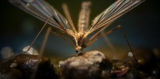 Πως θα διώξετε τα κουνούπια χωρίς σπρέι και ταμπλέτες