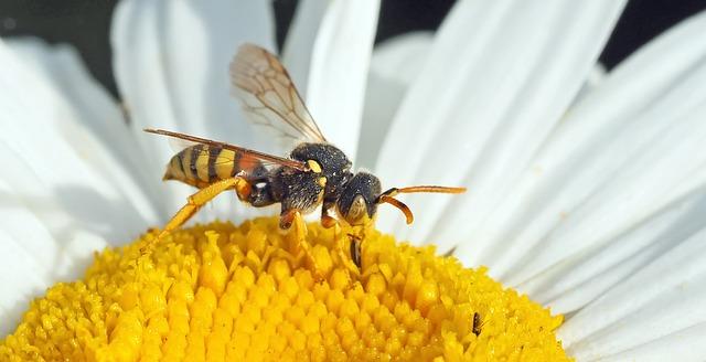 Πως θα φτιάξετε παγίδα για τις σφήκες και τις μέλισσες