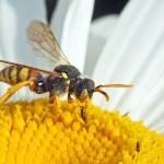 Παγίδα για μέλισσες και σφήκες