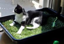 13 κατασκευές για το γατάκι στο σπίτι