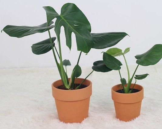 Φυτά εσωτερικού χώρου χωρίς σκουλήκια