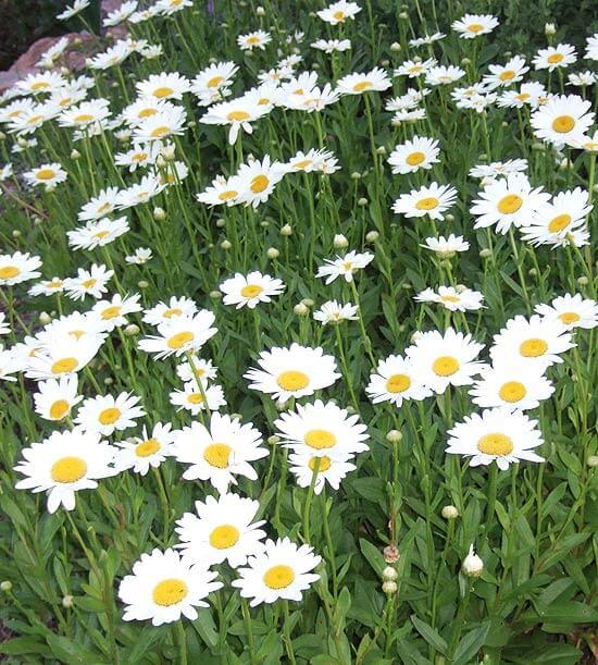 Just όμορφα λουλούδια