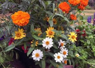 Ο κήπος τον Αύγουστο