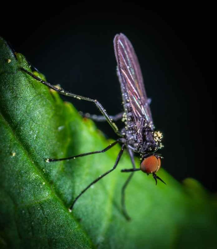 Αυτό το βότανο διώχνει τα κουνούπια