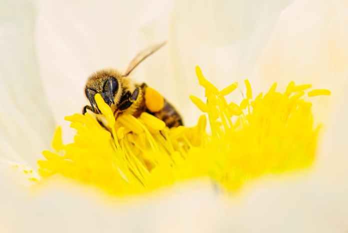 Τις σφήκες και τις μέλισσες, έτσι θα τις διώξεις