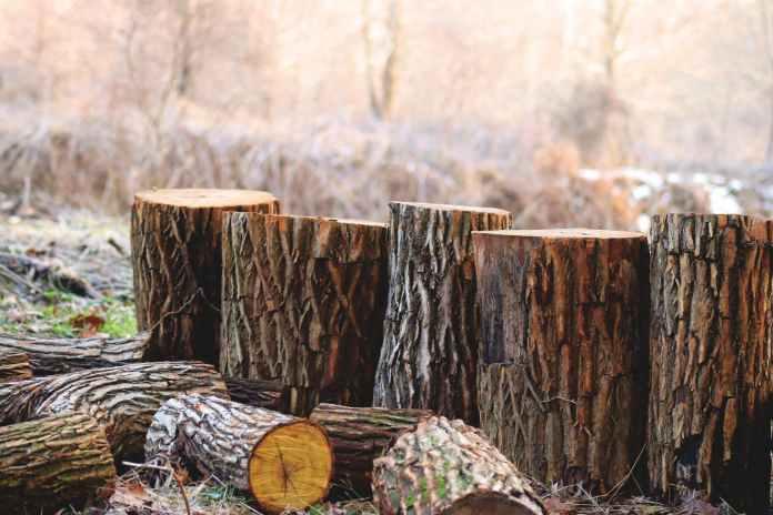 Αν κόψεις το δέντρο και μείνει κορμός, θα τον αξιοποιήσεις