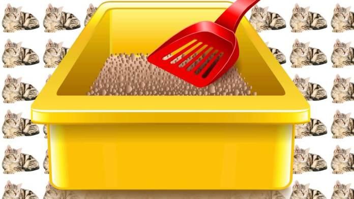 Για να αλλάζεις την άμμο της γάτας παστρικά και γρήγορα