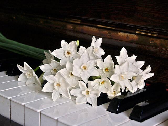 Τα πλήκτρα του πιάνου – καθαρισμός
